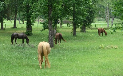 Horses Eating Grass, Bed and Barn in Kennard, TX