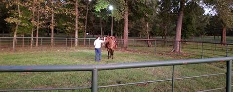 Horse and Owner in Horse Pen, Horse Stables in Kennard, TX